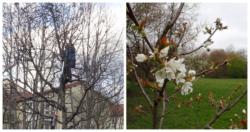 Obstbaumschnitt 2021 BUND Hürth
